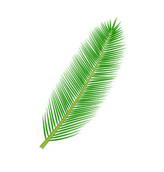 Tropical palm leave vector