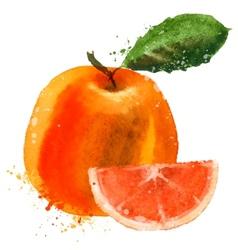 Grapefruit logo design template fruit or vector