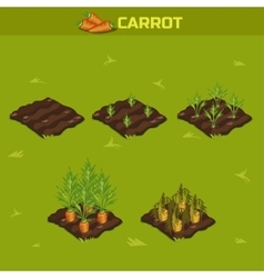 Set 9 isometric stage of growth carrot vector