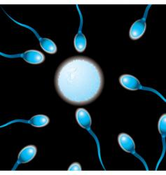 sperm n egg vector image