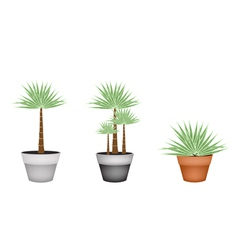 Three palm trees in ceramic flower pot vector