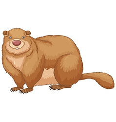 Woodchuck vector image
