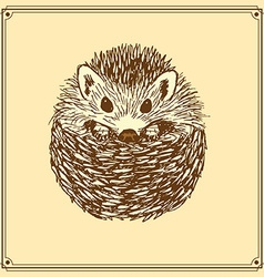 Sketch cute hedgehog in vintage style vector image vector image