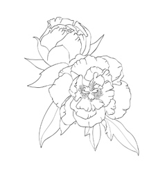 Contour image of peonies vector