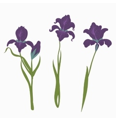 Set three irises isolated on white background vector