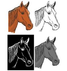 bay horse vector image vector image