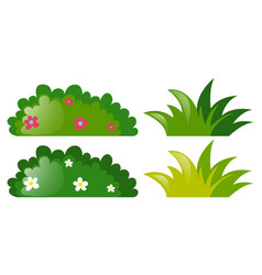 Four bushes with and without flowers vector