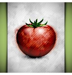 Tomato watercolor vector image vector image