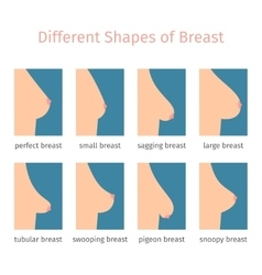 Breast shapes vector image