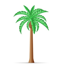 Palm tree 20 vector
