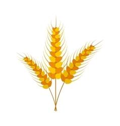 Three stalks of ripe barley icon vector