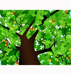 Crown of a tree vector image