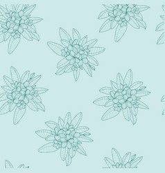 Pattern of floral hawaii flower frangipani and vector