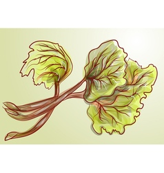 Rhubarb vector