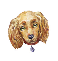 Watercolor cocker spaniel dog vector
