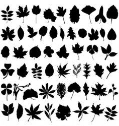 floral and leaf vector image
