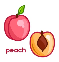 Stylized of fresh peach on white vector
