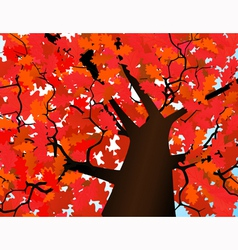 Autumn crown of a tree vector