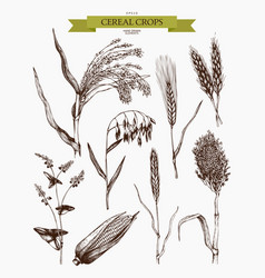 hand drawn agricultural plants sketches vector image