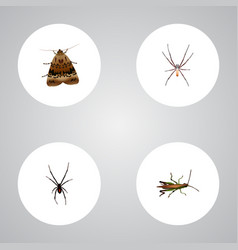 Realistic spider locust spinner and other vector