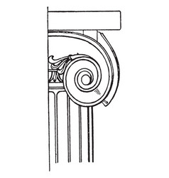 Ionic capital spiral curves vintage engraving vector
