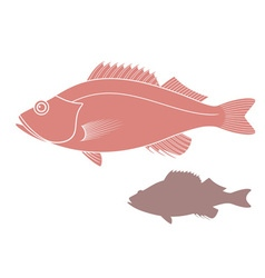 Ocean perch vector