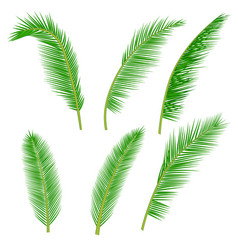 tropical palm leaves collection vector image vector image