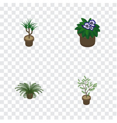 Isometric houseplant set of houseplant fern vector