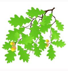 Oak leaf vector image