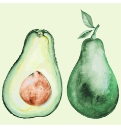Watercolor avocado vector