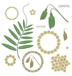 Lentil vector image vector image