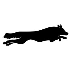 running dogs silhouette border collie vector image