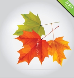 Abstract nature leafs autumn symbol october vector