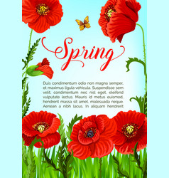 spring time greeting card of poppy flowers vector image