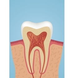 Tooth sheme icon vector