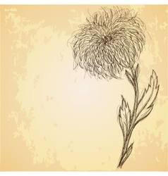 Sketch of chrysanthemum flower on grungy texture vector