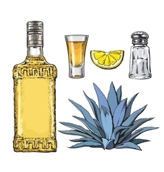 Set of tequila bottle shot salt mill agave and vector