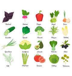 set of tasty vegetables vector image