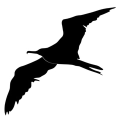 silhouette of fregat bird vector image vector image