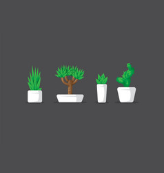 floral plants and green cactus in pots isolated on vector image