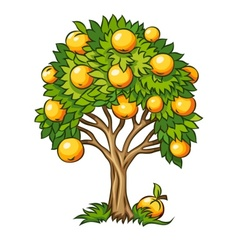 fruit tree isolated vector image vector image