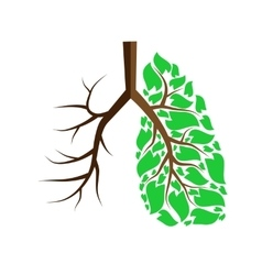Lungs isolated on white vector image vector image