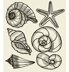 Seashells hand drawn set vector