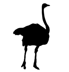 silhouette of ostrich vector image vector image