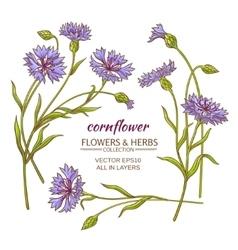 cornflower set vector image vector image