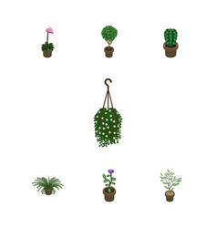 Isometric flower set of plant peyote blossom and vector