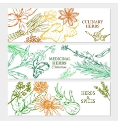 Natural Healthy Plants Horizontal Banners vector image