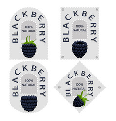 the blackberry vector image