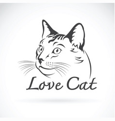cute cat on white background pet animal vector image