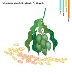 Mangoes with vitamin c b a and minerals vector